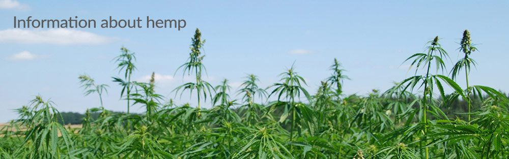 All information about hemp